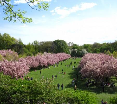 Brooklyn Botanic Garden Open Venues Open House Tours